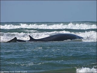 Whale watching! - Lincoln City house vacation rental photo