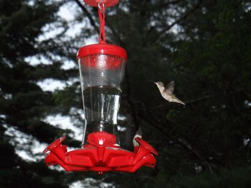 Watch the hummingbirds at the feeder from the porch.