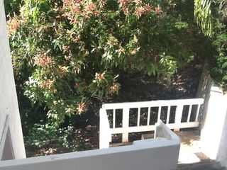 Southside apartment photo - Mango tree at entrance