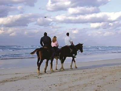 Horse are on the beach for rent