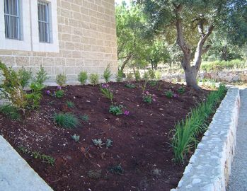 New planting at the front entrance.