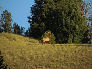 Guffey farmhouse photo - Bull Elk seen this fall