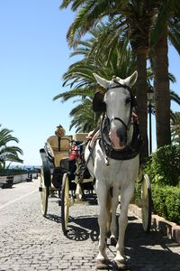 Horse and carriage rides in Marbella