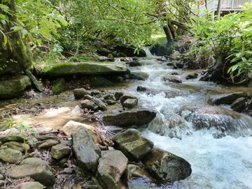Maggie Valley cabin rental - Rushing year round creek in your back yard!
