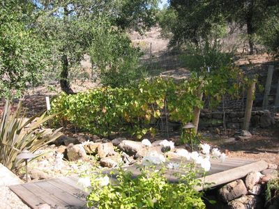 The vineyard and olive trees on other side of dry creek