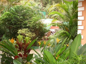Our tropical garden