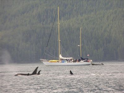 Pods of up to 50 Orcas occasionally pass through the Strait - breathtaking!!!