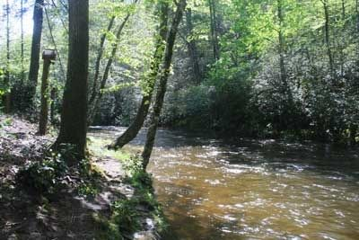 View of creekside in front of cabin, easy access to Big Snowbird Creek.
