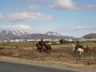 Reykjavik apartment photo - Horse rental close by