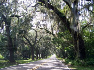Driving Oak Lined Road Into Floral City!