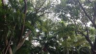 Canopy Tree House – Authentic Coconut Grove Living