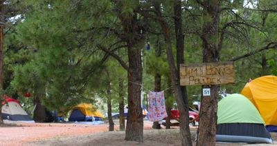 There is plenty of room under the pine trees for a collection of tents!