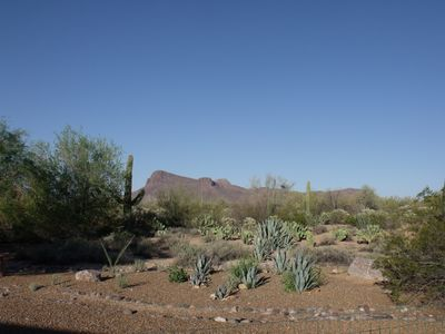 Tucson house rental - Our backyard!!.
