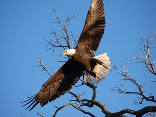 Keokuk cabin photo - Eagles