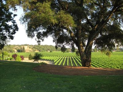 Enjoy lawns, gardens, and a walk in through our vineyards