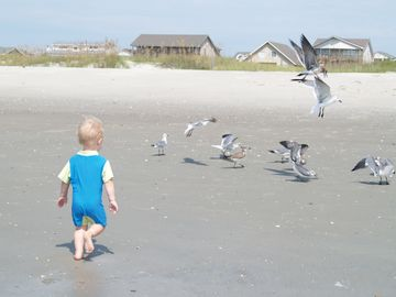 "Plenty of ""wild"" life to play with on the beach."