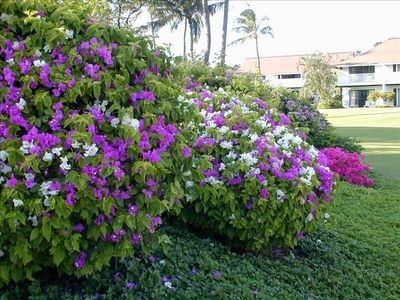 Beautiful landscaping at Kiahuna Plantation make it a special place.