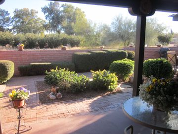 Green Valley house rental - Wide open patio with lots of trees and birds.