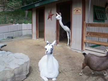 Our Small Petting Zoo located by our private horseback riding stables