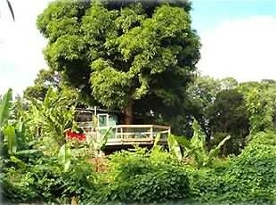 Surrounded by Kauai's Paradise, Mamma Mango Tree Shelters You