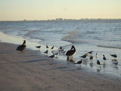 Sanibel's Famous Beaches have lots of wildlife