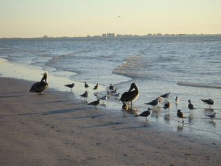 Sanibel Island condo photo - Sanibel's Famous Beaches have lots of wildlife