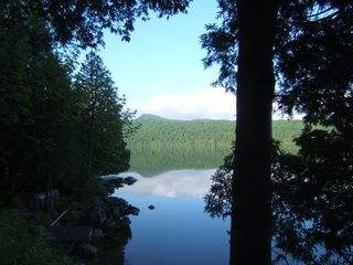 Lake Willoughby cottage photo - View from Bar-B-Q with Beautiful Ferns and Ground Cover Below