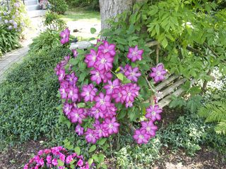Niagara-on-the-Lake cottage photo - Flowers