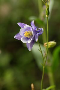 Enjoy the state flower, the Columbine, that grows out your back door.