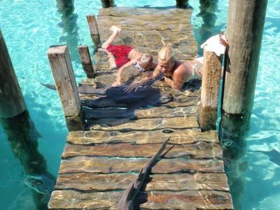 Petting sharks at Compass Cay