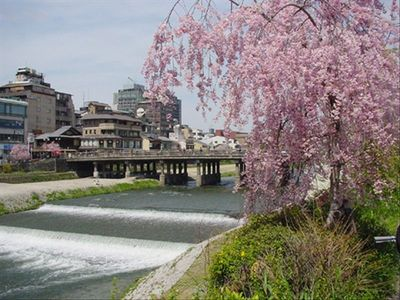 The Kamo River. The heart of downtown as seen from the Gion side (10 min. walk)