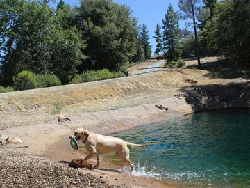 Sutter Creek house rental - Dogs love our private pond (yes it's full)! The house is at the top of the hill