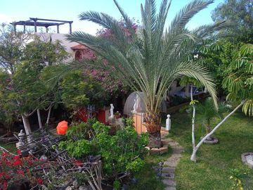 Garden with large palm tree