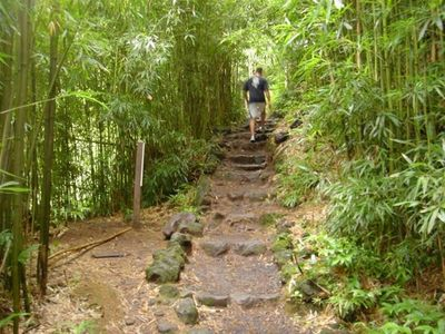 Bamboo Trail Nearby