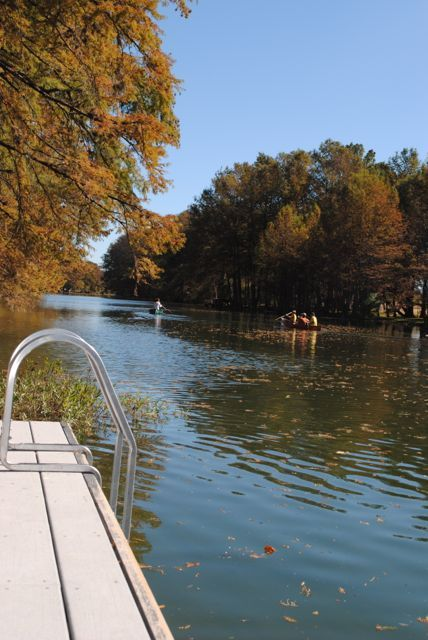 The Guadalupe riverfront is lined with beautiful Cypress trees