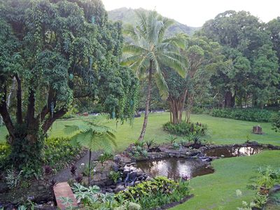 The grounds at the JungleRiverhouse as viewed from the lanai.