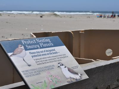 Snowy Plover Protection