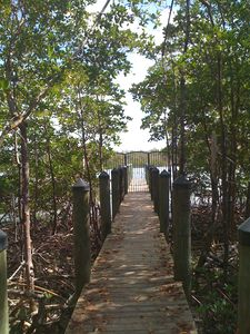 Boardwalk through the mangrove forest to the boat dock.