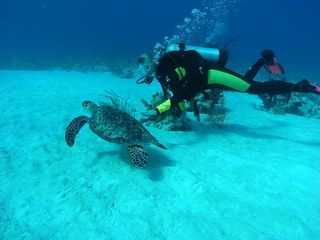 San Salvador house photo - Swim with a sea turtle