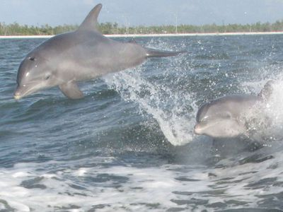 Dolphins off the Pointe Santo beach.