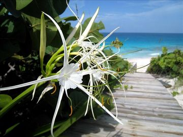 Great Exuma cottage rental - Kevalli House Beach Path