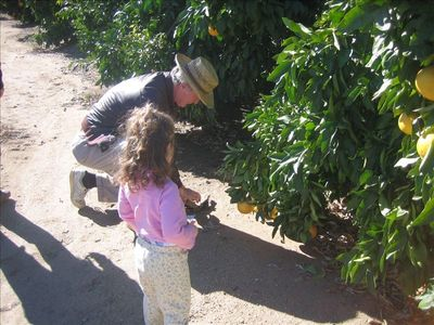 Grandfather and granddaughter sizing up the Star Ruby grapefruits.