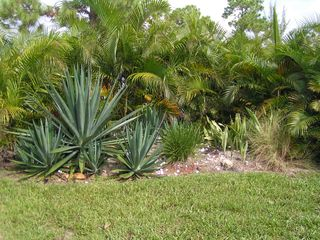 Cape Coral villa photo - View Garden