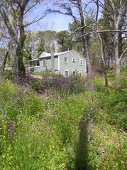 Springtime Wildflowers - Wellfleet cottage vacation rental photo