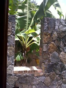 View of banana tree from master shower