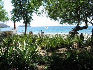 Playa del Coco condo photo - The beach at Coco