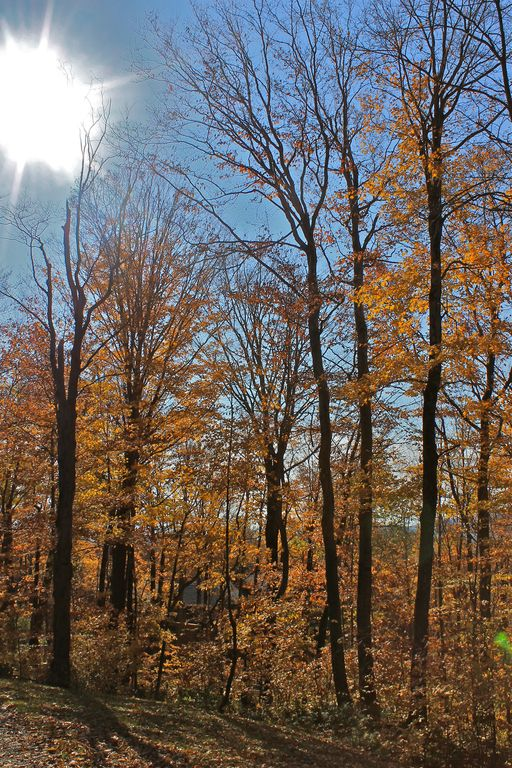 Stowe's nationally recognized fall foliage
