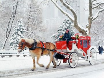 Central Park Horse Carriage Ride