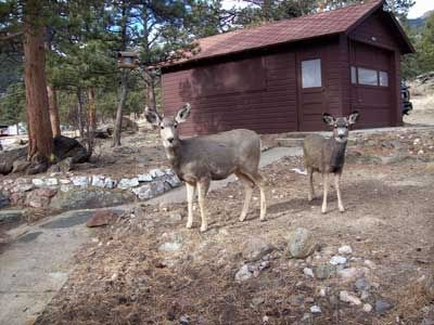Deer Visiting The Cabin