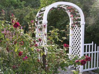 Wells house photo - Beautiful Arbor and Roses